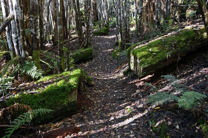 Bush walking Cradle Mountain