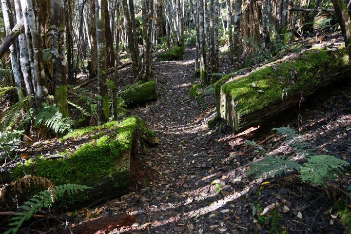 Bush walking Cradle Mountain